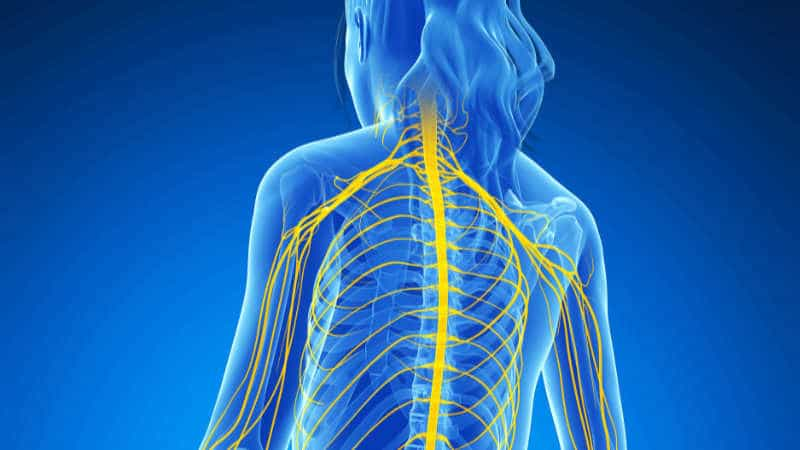 What is Chiropractic Neurology?
